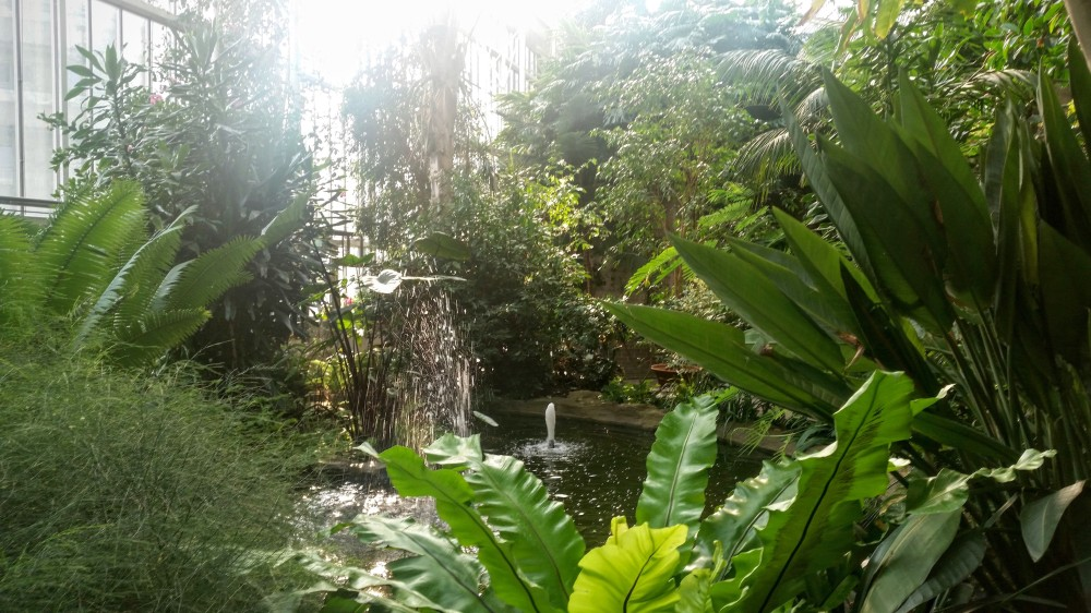 Barbican Conservatory (01)