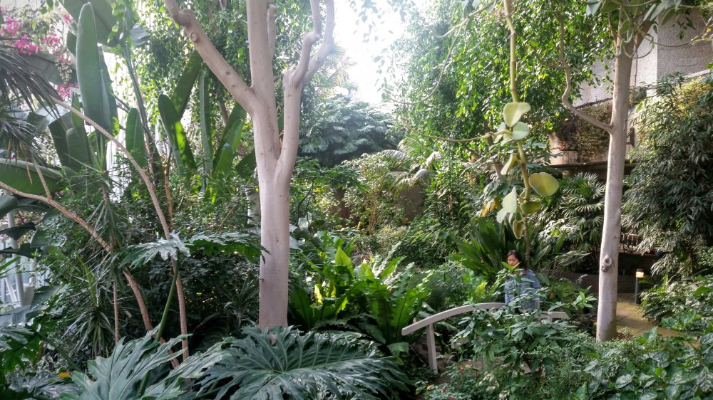 Barbican Conservatory (02)
