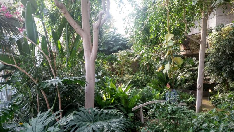 Barbican Conservatory (02)
