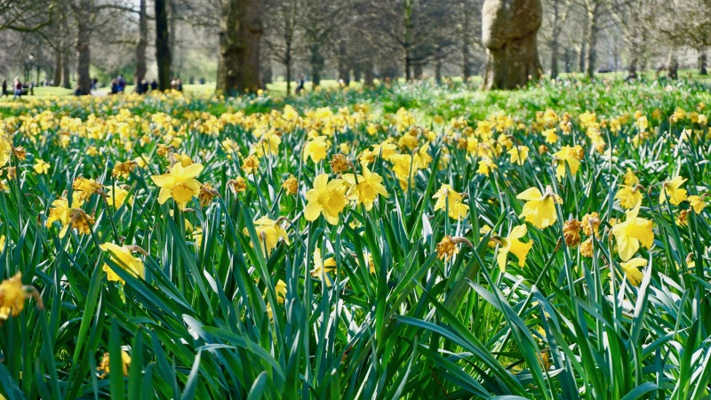 Spring in London (08)